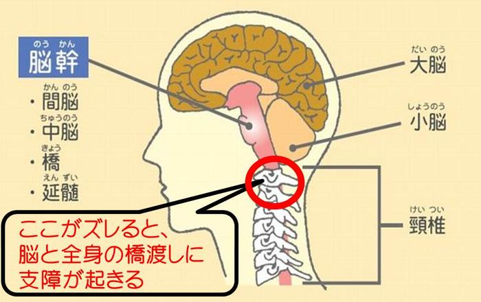 脳ー首ー脊髄